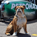 The Monaco GP Is Top Dog